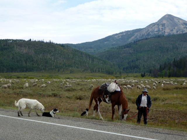 Sheepherder