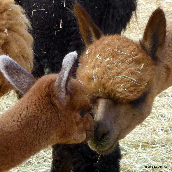 Irresistible cuteness!