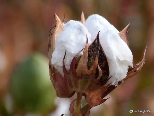 textile-fiber