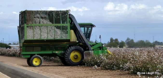 textile fiber cotton