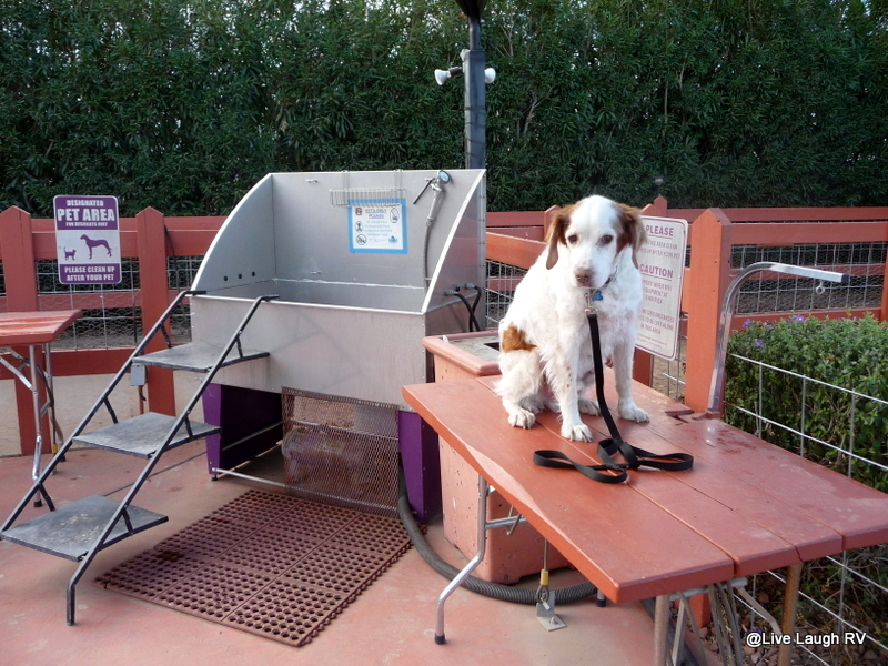 Bear Was Not Happy About The Dog Washing Station However After Weeks Of Boondocking Last Winter I Sure Deserts Edge RV Park Phoenix AZthe Purple