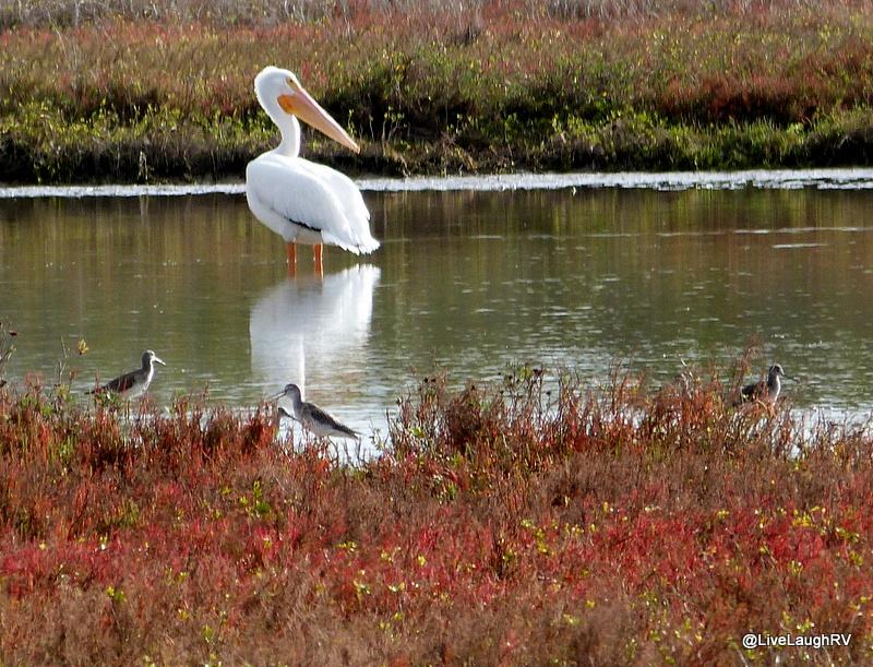 Birding In Texas Wildlife Refuge