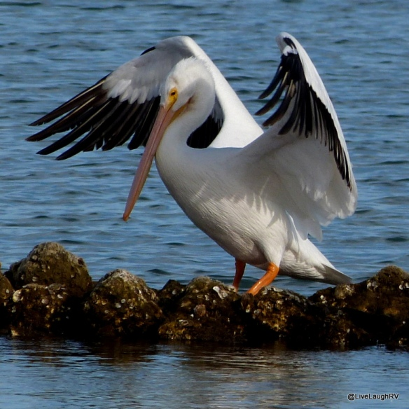 birding in Texas