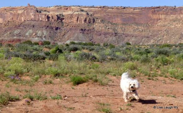 wildlife in Moab