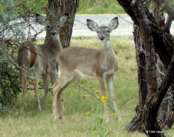 South Llano State Park