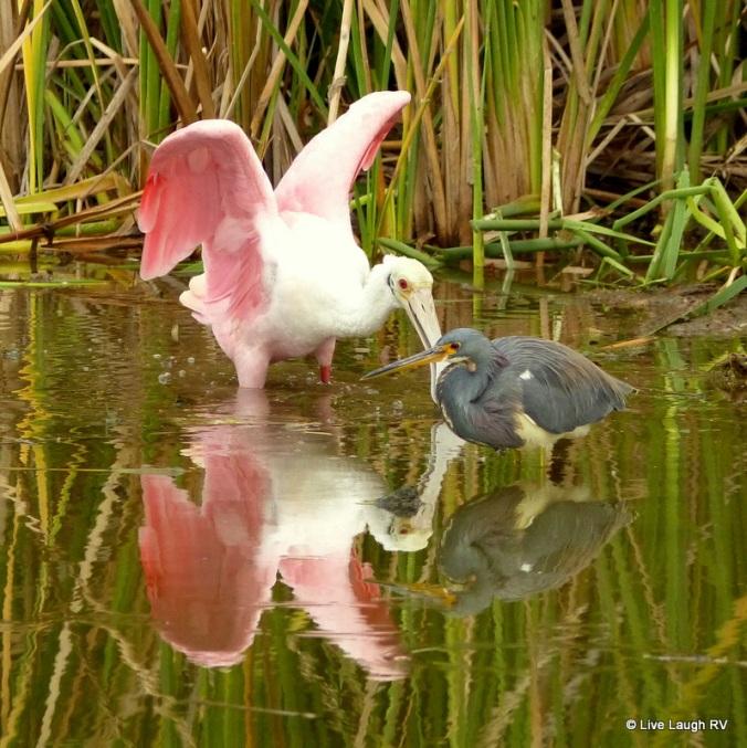 birding in Port Aransas Texas