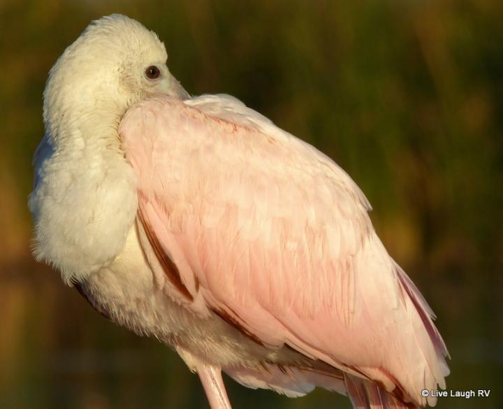 birding along the Texas Gulf Coast