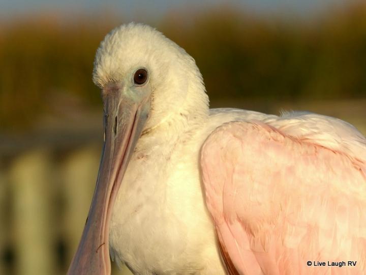 Texas Gulf Coast birding trail