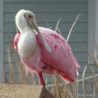 Texas Coastal birding trail