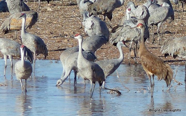 roosting cranes