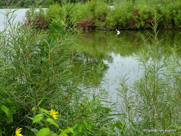 Albert Lea Lake