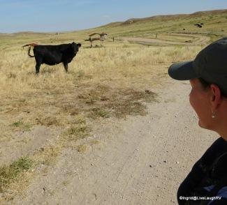 Pawnee National Grasslands