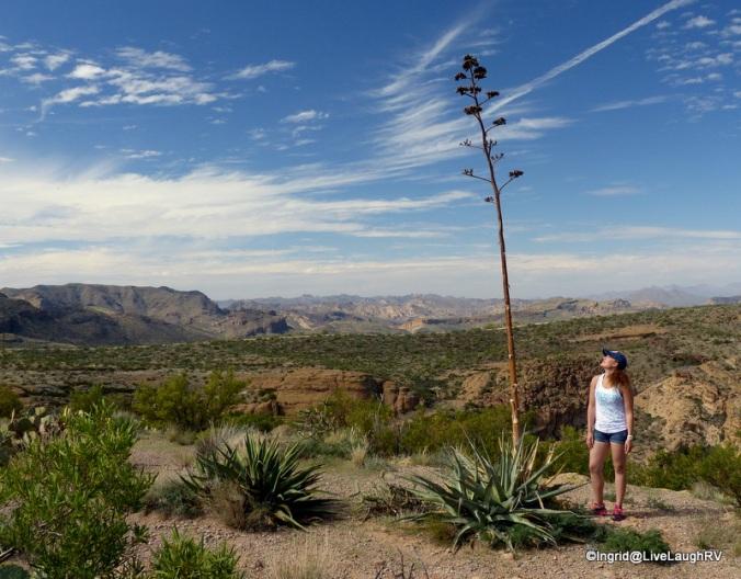 Ashton admires a Century Plant