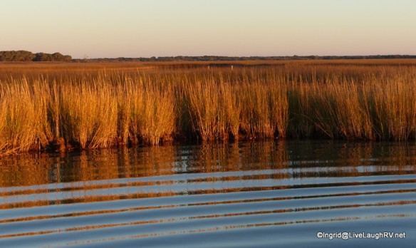 Can you see the two whooping cranes?