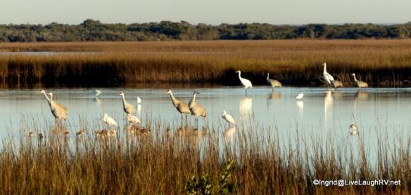 coastal birds