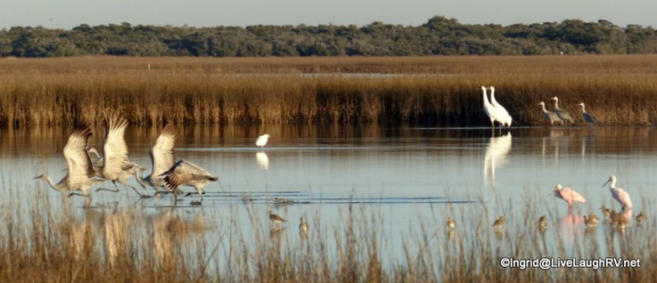 a birders delight!