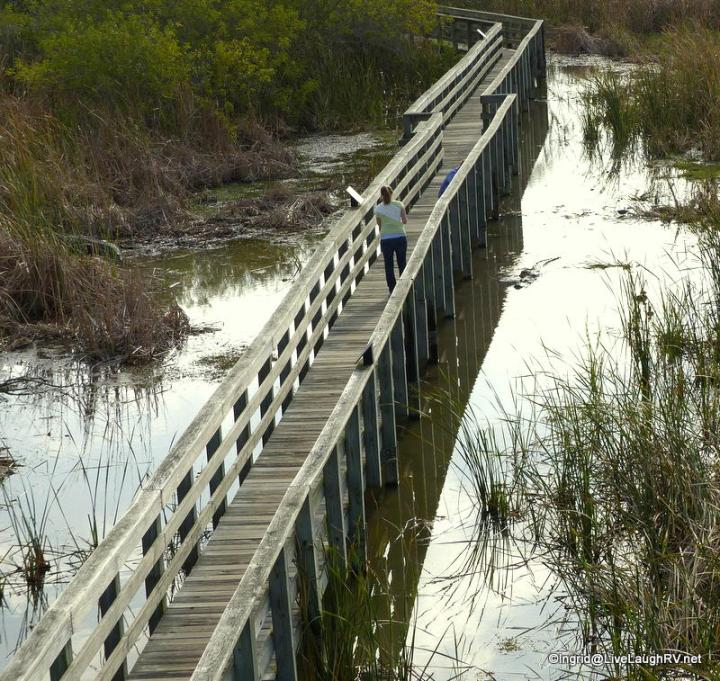 This is the boardwalk at the birding center. The woman is carrying a newborn baby. Look in the water to her right. Mr. Alligator is eyeing her.