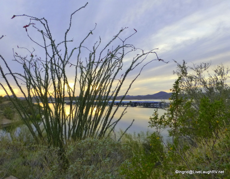 silhouette of an ocotillo cactus, but let's take a closer look at the bush lower right...
