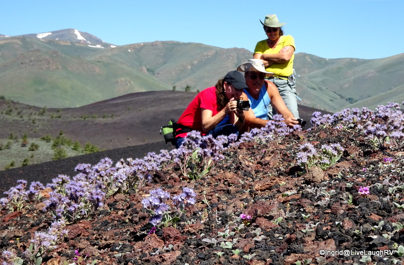 those wildflowers captivated our attention
