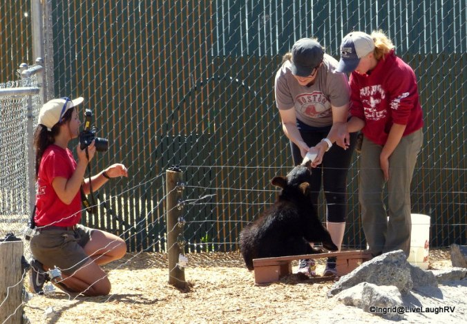 For an additional fee, you can bottle feed a bear cub