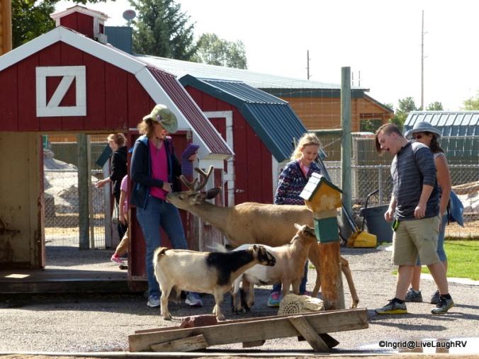 The petting zoo was fun - watch out for t-shirt nibbling deer!