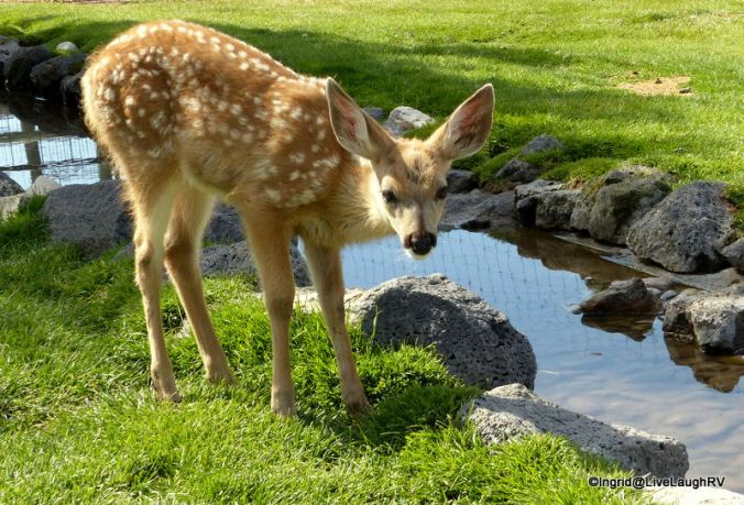 This little fawn was adorable