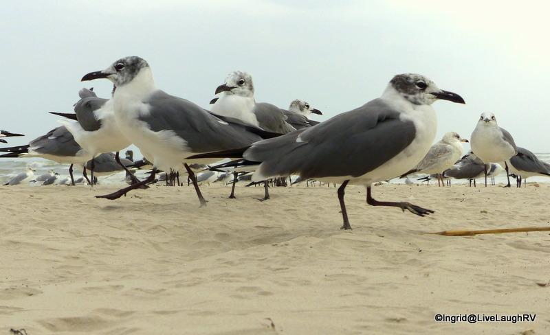 seagulls walking