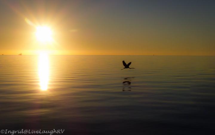 bird in-flight