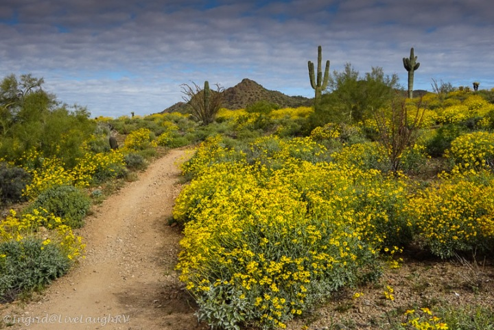 bright yellow follows line a hiking trail in the Sonoran Desert in Phoenix Arizona