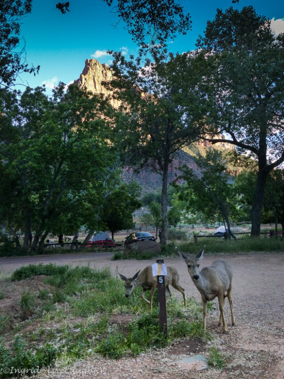 deer in Zion