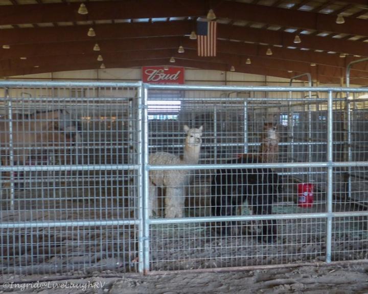 goodwin fire animal shelter
