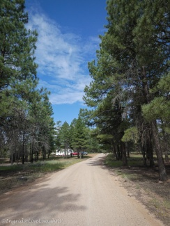 camping in Kaibab National Forest near Grand Canyon