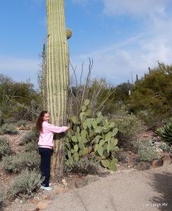 Saguaro cactus love