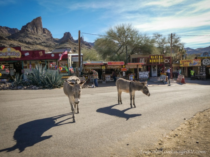 Oatman Arizona wild burros