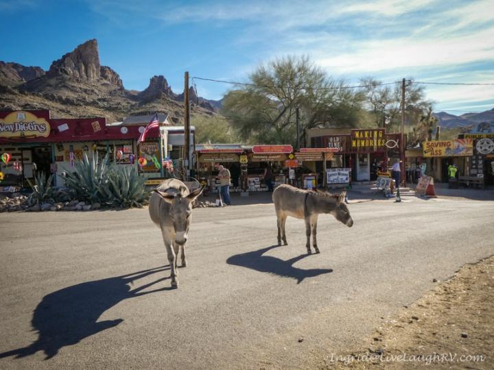Oatman Arizona wild burros