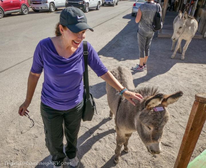baby burro Oatman Arizona