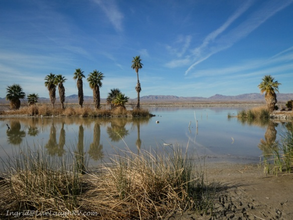 Havasu Wildlife Refuge