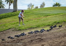 golf in Lake Havasu City