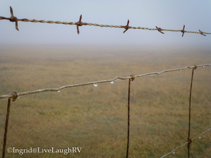 barbed wire morning fog