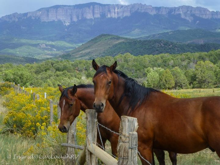 Ranches near Ridgway Colorado