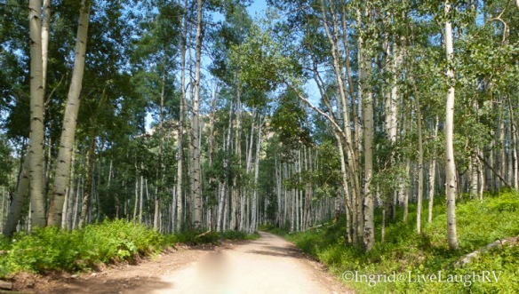 Aspen Trees Keebler Pass near Crested Butte Colorado