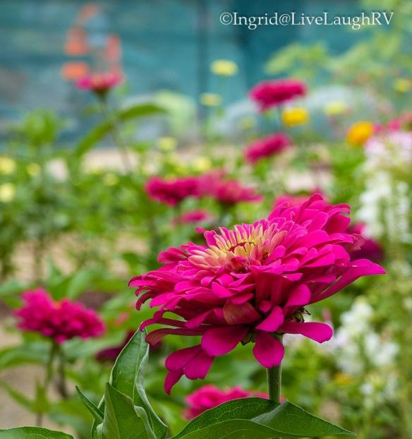 Denver Botanical Garden