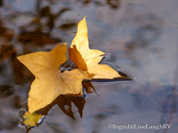 leaves floating in water