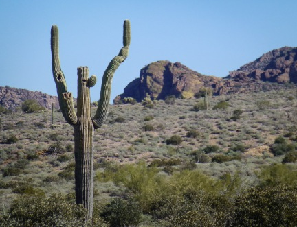 saguaro cactus looking like it is doing a happy dance