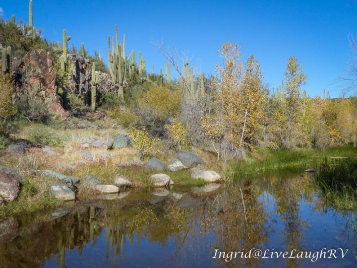 Jewel of the Creek Preserve, Cave Creek, AZ