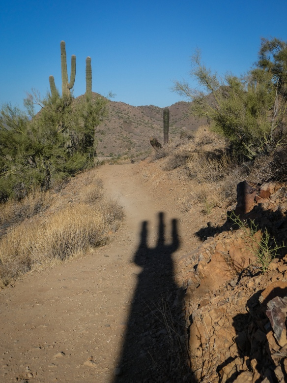 shadow of a saguaro cactus casting a fork on a trail