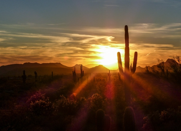A golden sunset with the silhouette of a saguaro cactus