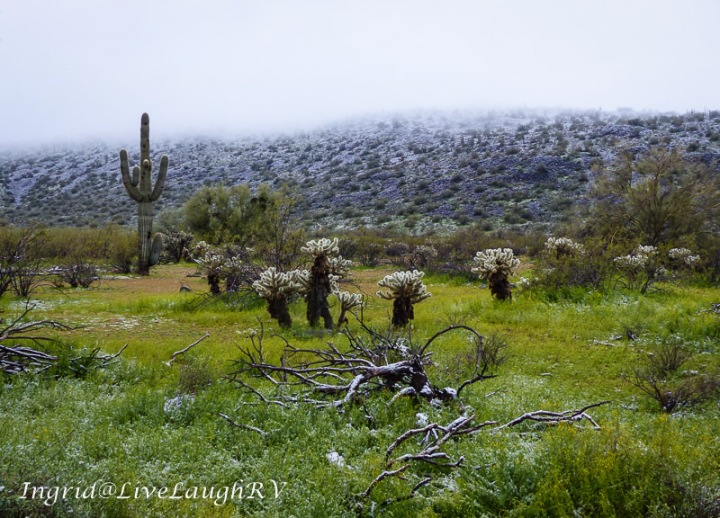 a dusting of snow on a gloomy day in Phoenix
