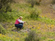 Nancy photographing the wild poppies.