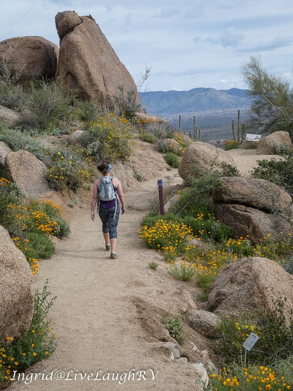 wildflowers along the Pinnacle Peak trail in Scottsdale, Arizona
